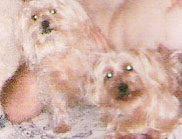 Casa Gracia. Admite mascotas